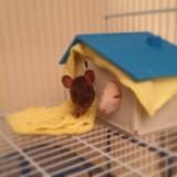 Ah Rats!!!